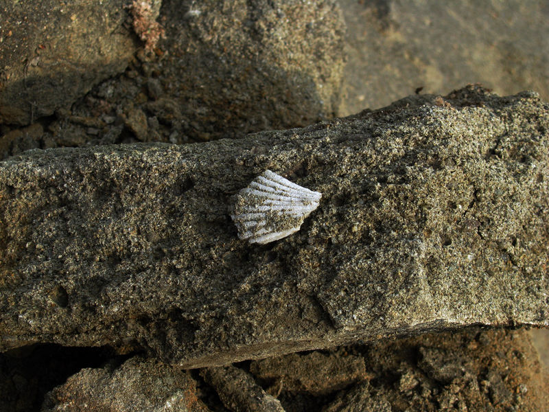 18MA2_Fossil2