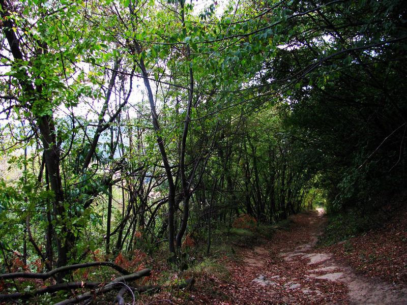 4MA_Trail2