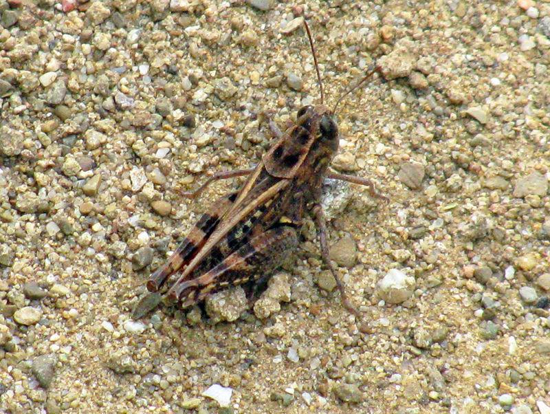 15MA_Grasshopper