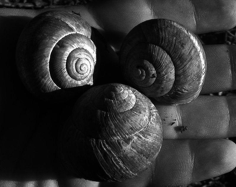 SnailsBW_